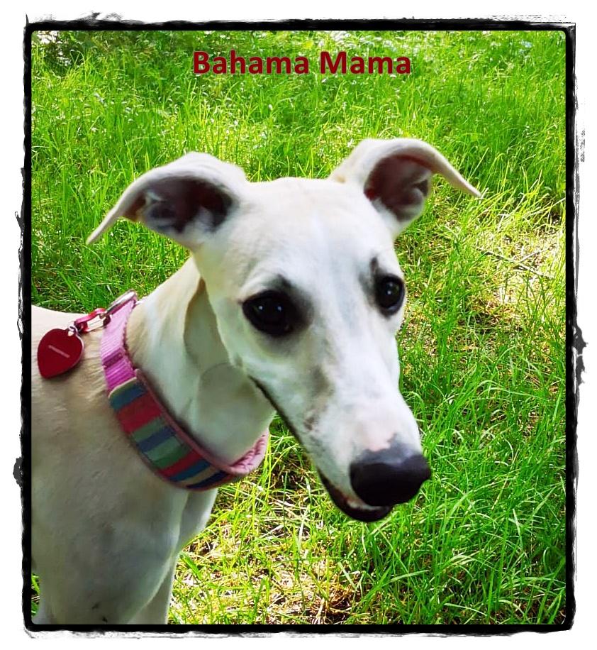 Bahama Mama Gesicht