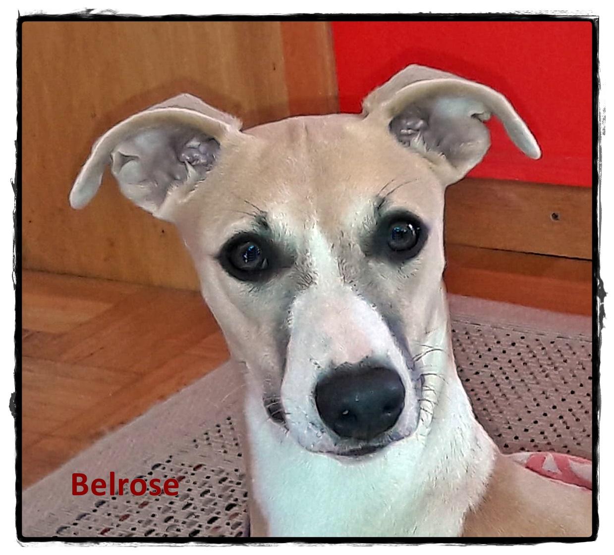 Belrose Gesicht