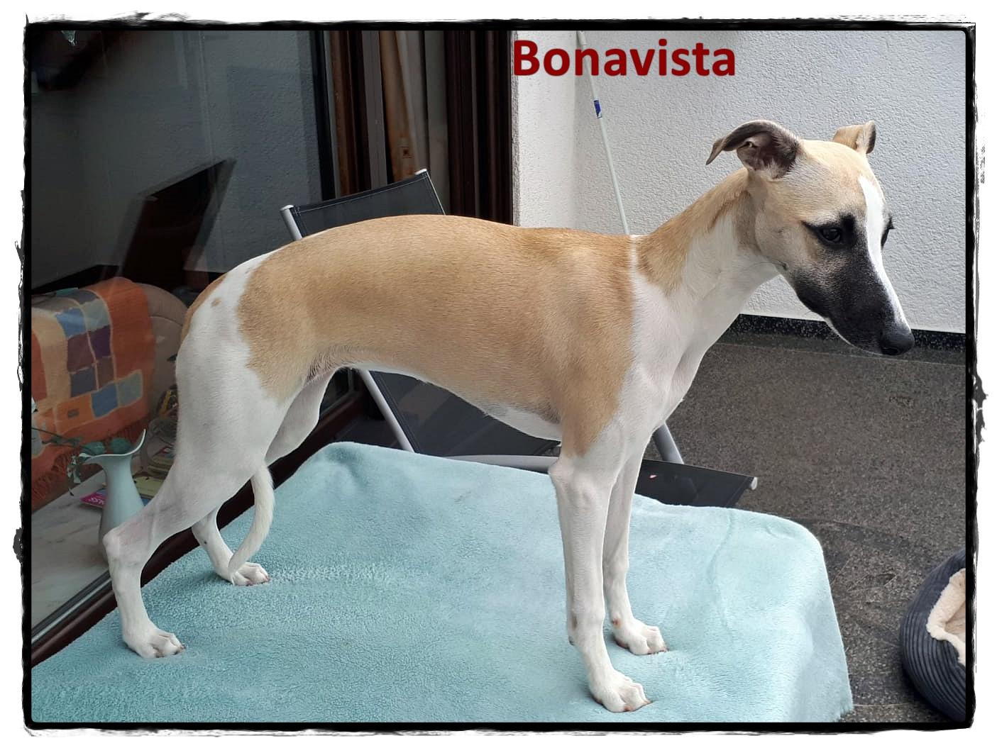 Bonavista Stand